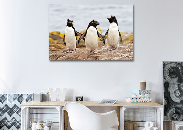 3 Penguins Canvas Art Prints