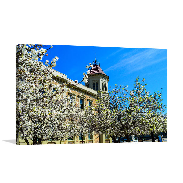 Adelaide Spring Flower Art Prints