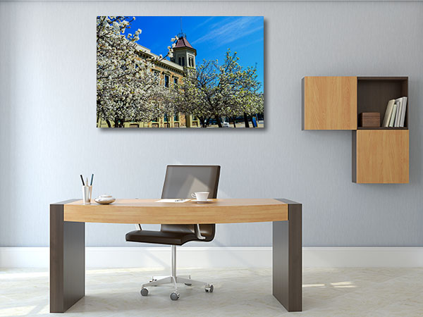 Adelaide Spring Flower Canvas Prints