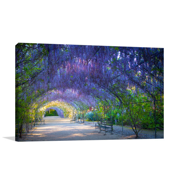 Adelaide Wisteria Lane Canvas Art