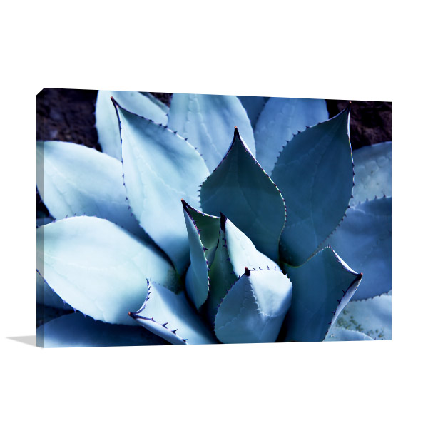 Agave Cactus Plant Artwork