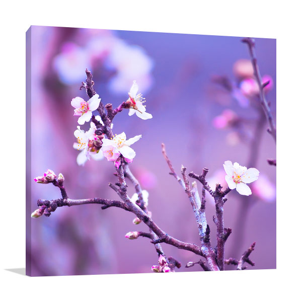 Almond Tree Canvas Art