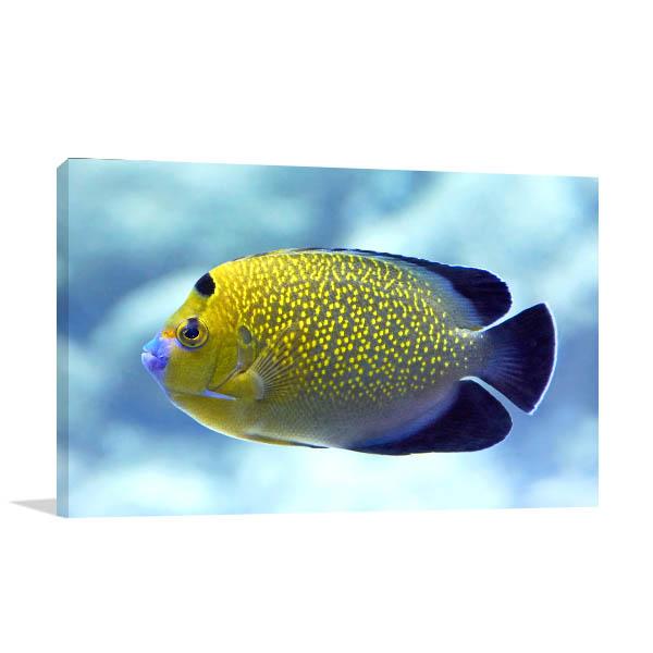 Angel Fish Canvas Art Prints