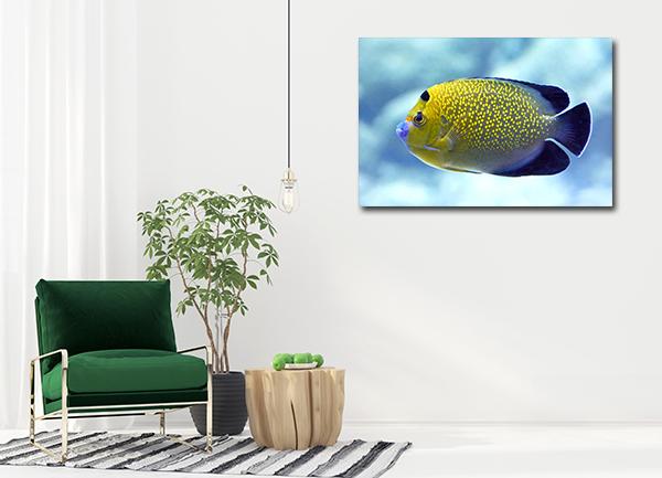 Angel Fish Art Prints
