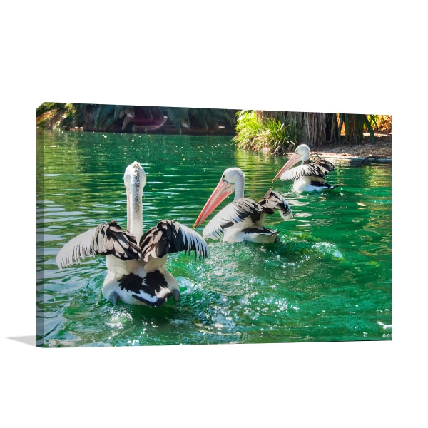 Australian Pelicans Perth Canvas Art