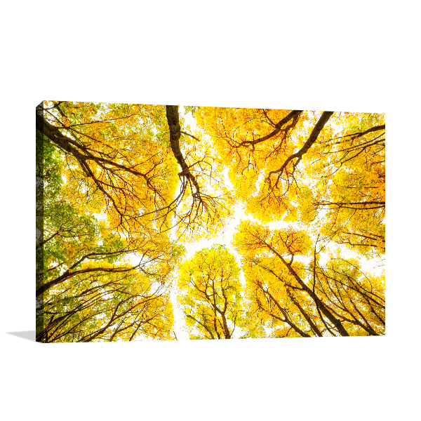 Autumn Pattern Canvas Prints