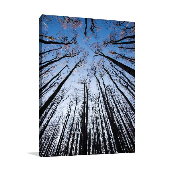 Autumn Trees Canvas Art Prints
