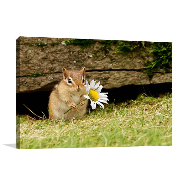 Baby Chipmunk Canvas Art Prints