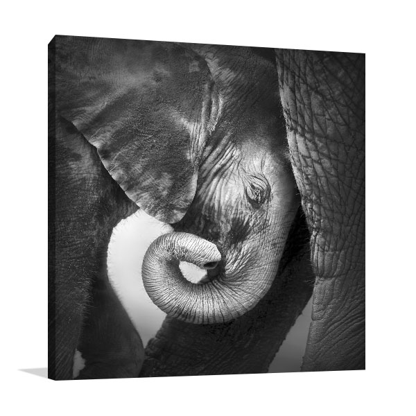 Baby Elephant Wall Art