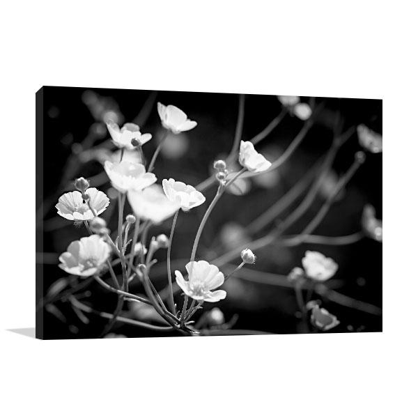 Backlit Buttercup Flowers Canvas Art Prints