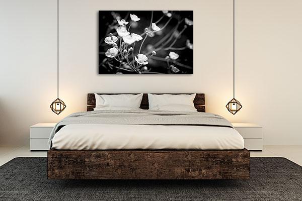 Backlit Buttercup Flowers Canvas Art