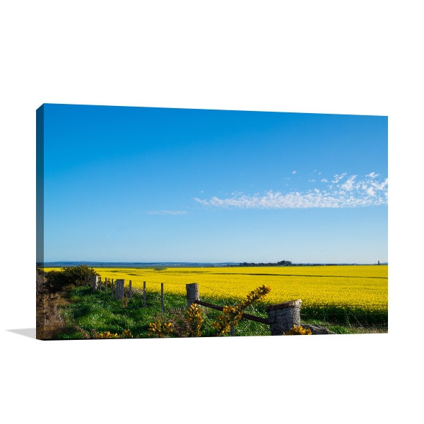 Ballarat Canola Field Prints Canvas