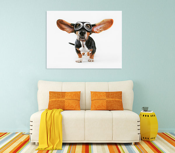 Basset Hound With Goggles Print Artwork