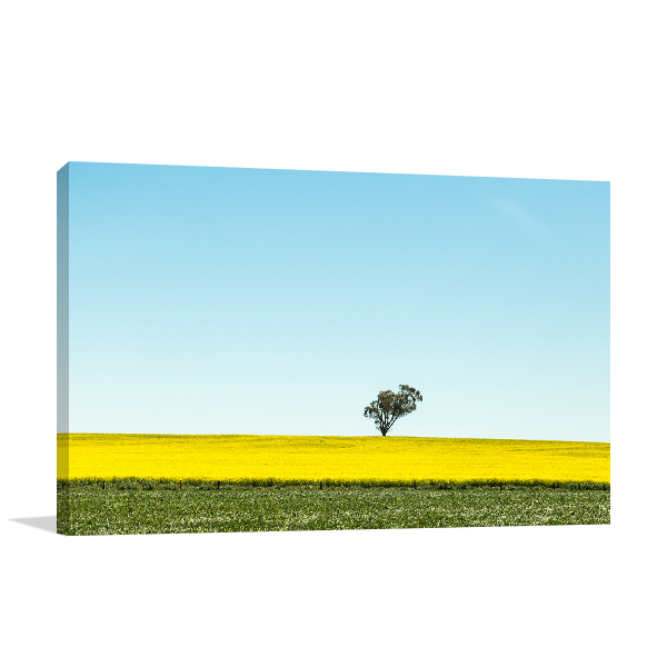 Beautiful Canola Mildura Canvas Art Prints