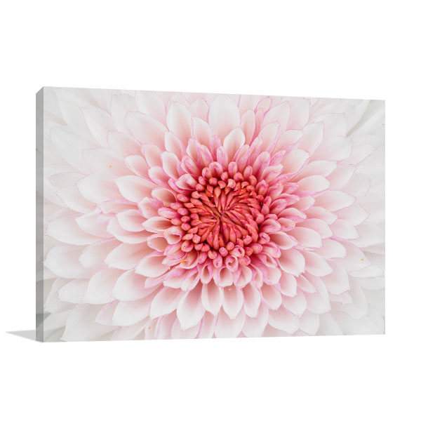 Beautiful Chrysanthemum Artwork
