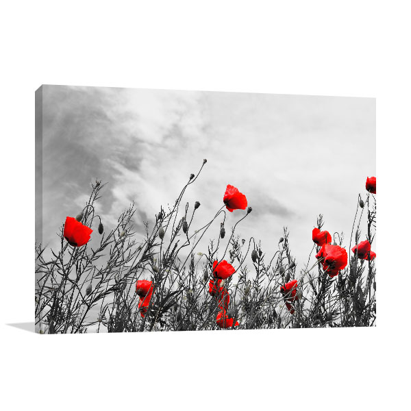 Beautiful Red Poppies Canvas Prints