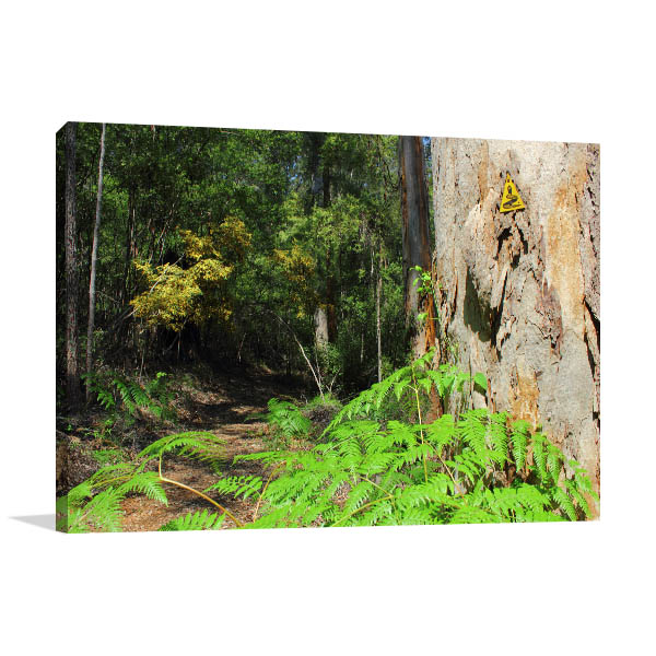 Beedelup Perth Art Print Hiking Track Canvas Art Prints