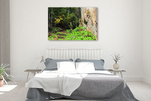 Beedelup Perth Art Print Hiking Track Photo Wall Arts