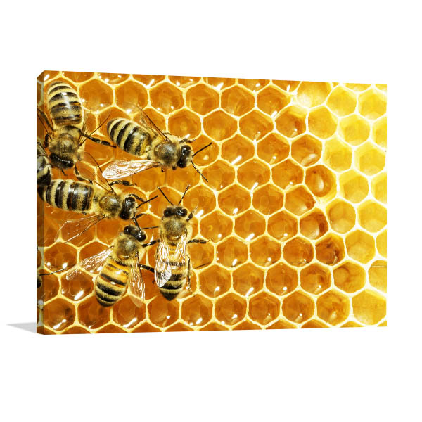 Bees on Honey Cells Canvas Art Prints