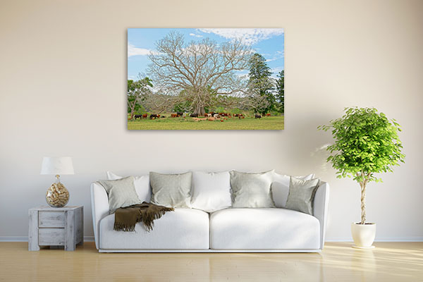 Bellingen Giant Fig Tree Photo Wall Art