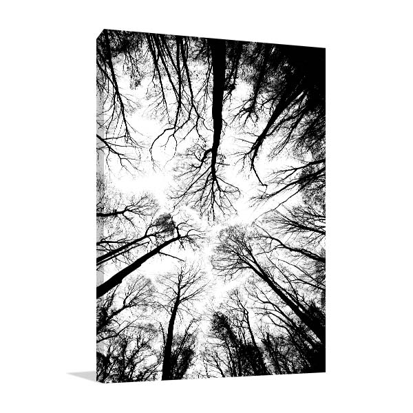 Below Treetops In Autumn Prints Canvas