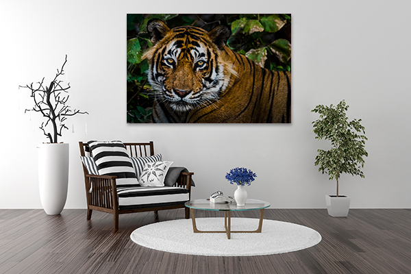 Bengal Tiger Art Print on the wall