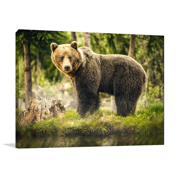 Big Brown Bear Prints Canvas