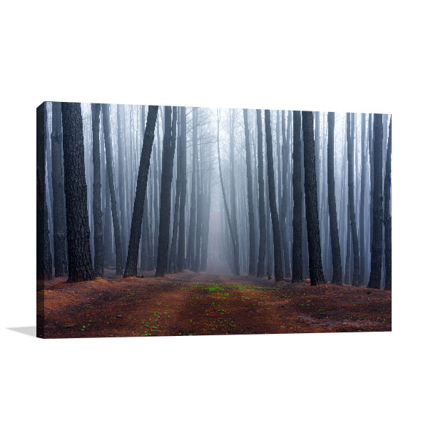 Birch in Adelaide Hills Canvas Art Prints