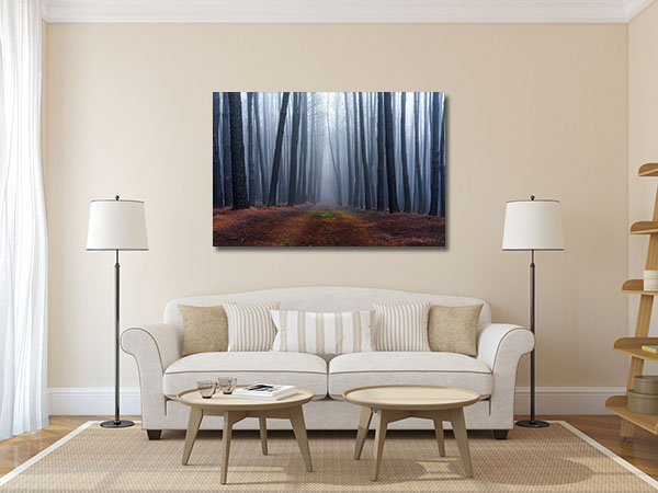 Birch in Adelaide Hills Prints Canvas