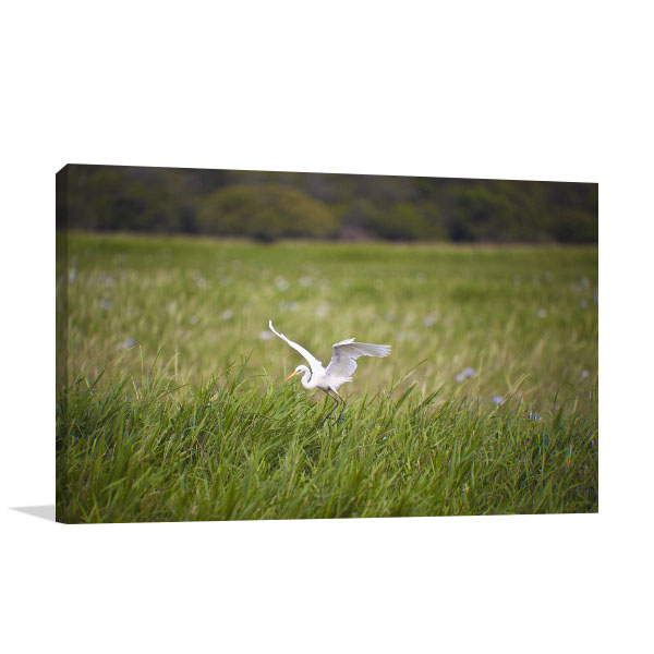 Bird Life of Kakadu Darwin Prints Canvas