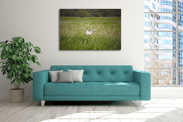 Bird Life of Kakadu Darwin Canvas Art
