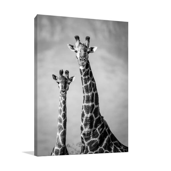 Black And White Giraffes Print Artwork
