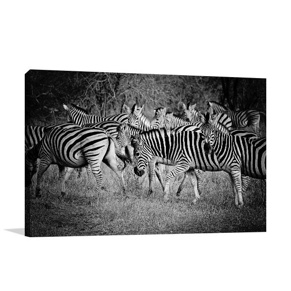 Black and White Zebras Artwork