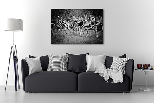 Black and White Zebras Prints Canvas