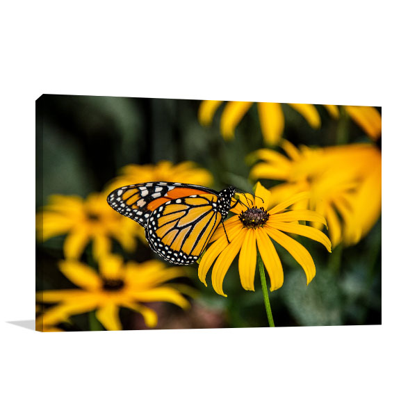 Black-Eyed Susan Print Artwork