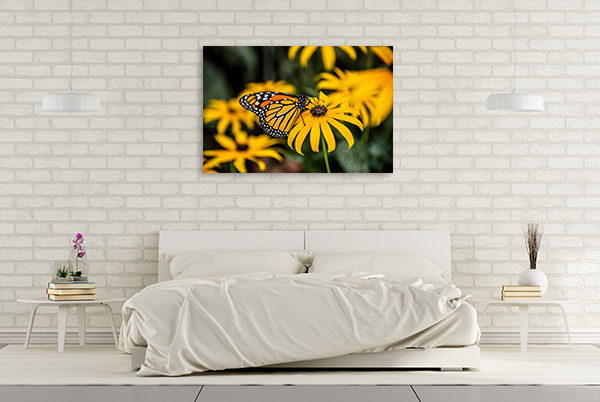 Black-Eyed Susan Artwork