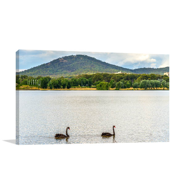 Black Swans Canberra Prints Canvas