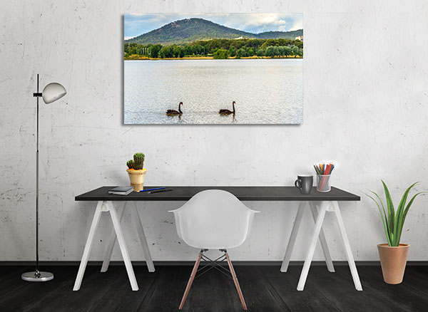 Black Swans Canberra Canvas Prints