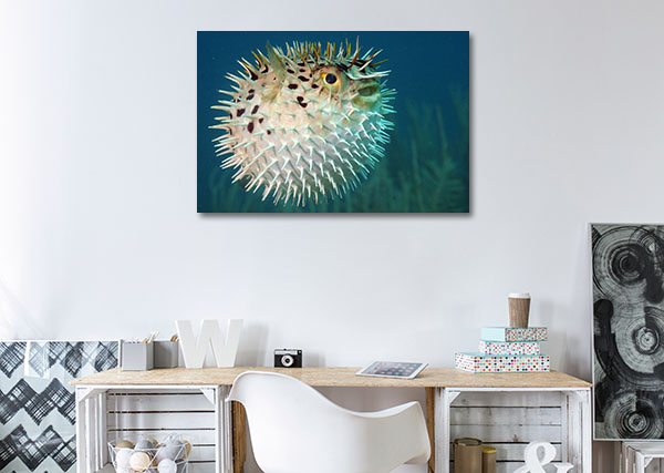 Blowfish Prints Canvas