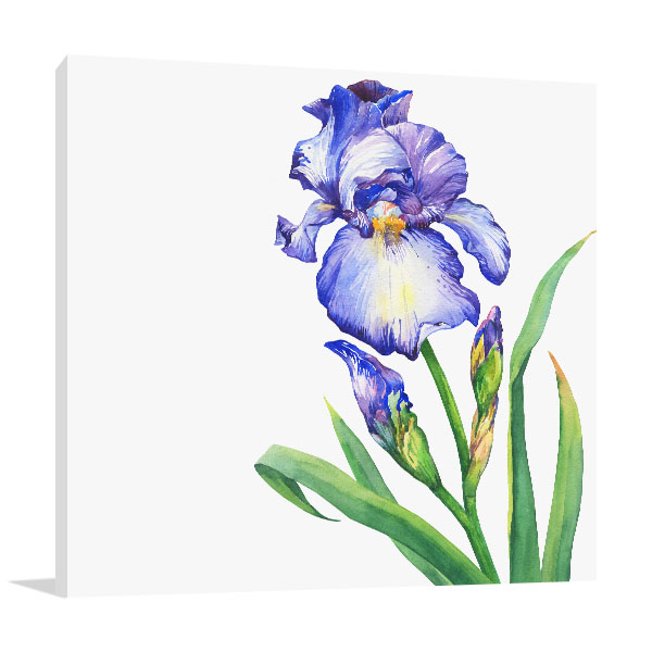 Blue Iris Canvas Prints