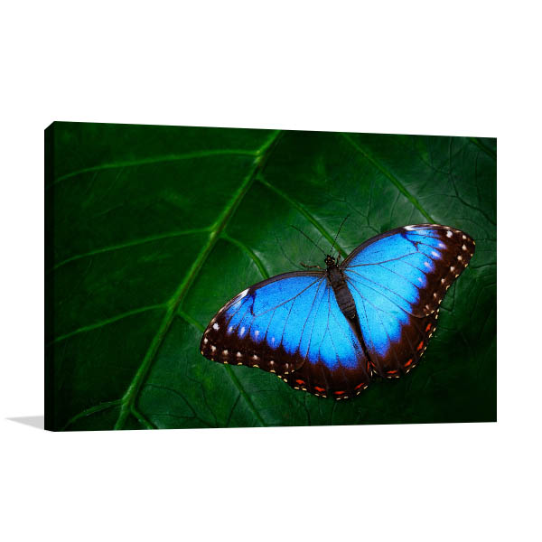 Blue Morpho Wall Art Print Artwork