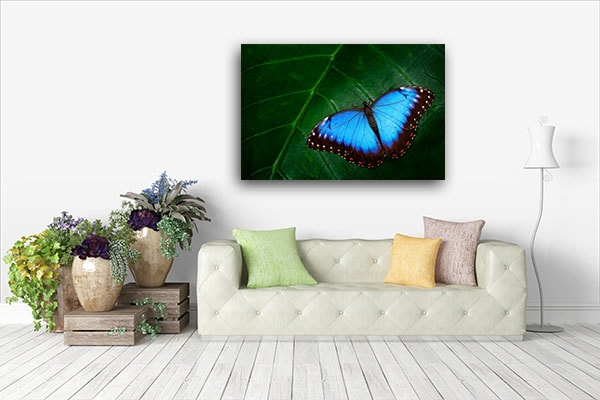Blue Morpho Wall Art Print Art Prints