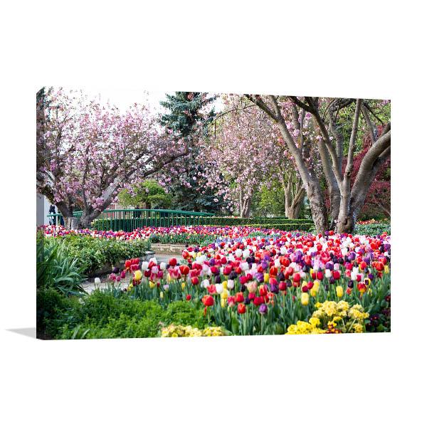 Bowral Art Print Of Tulips Garden Canvas Prints