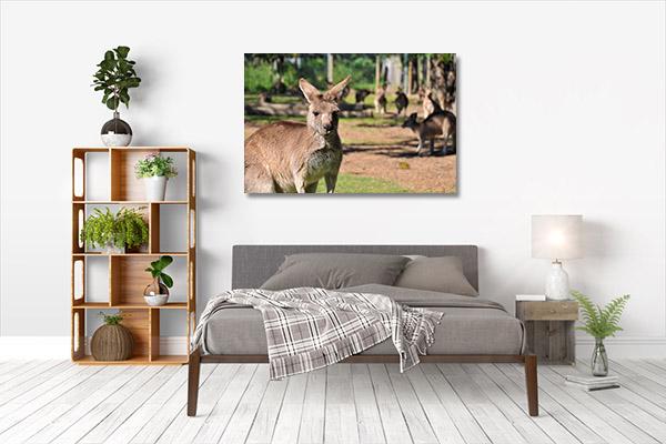 Brisbane Art Print Kangaroo Lone Pine Wall Art Print