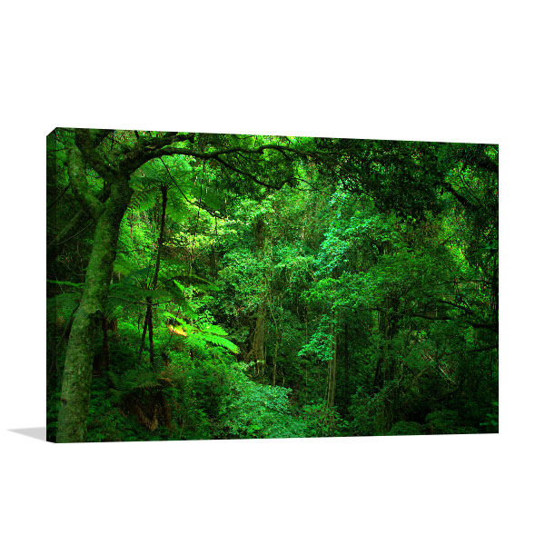 Bunya National Park Queensland Canvas Art