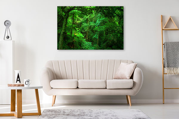 Bunya National Park Queensland Wall Art Print