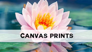 Canvas Print Art