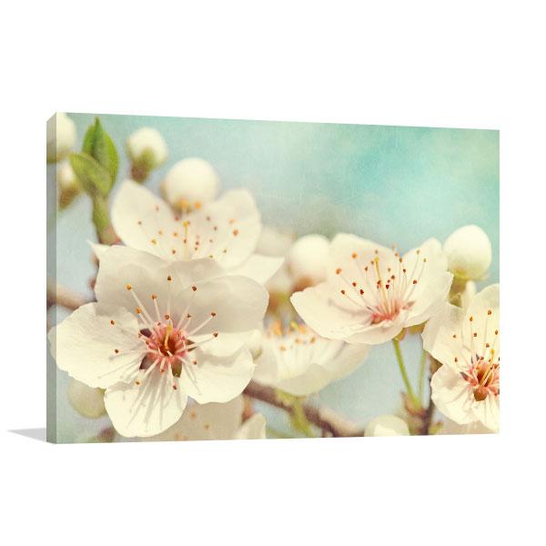 Cherry Blossoms Canvas Art