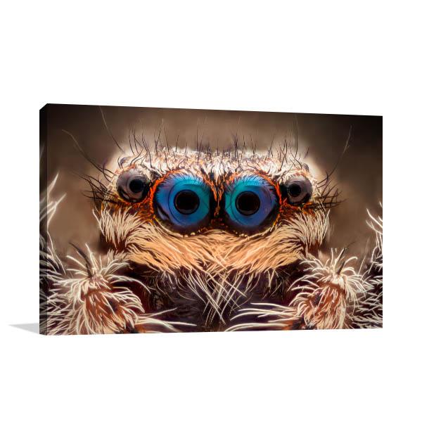 Close-up Spider Canvas Prints