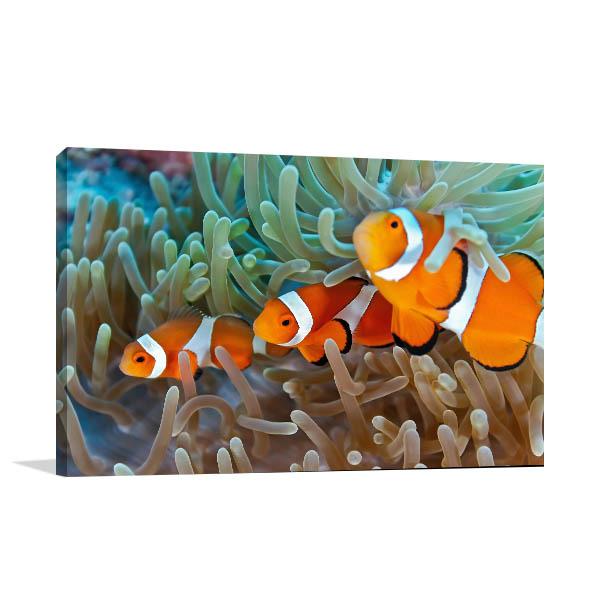 Clownfish Canvas Art Prints